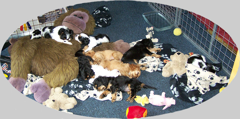 Ten puppies all asleep